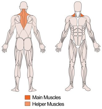 Main muscle targeted – Trapezius and Helper muscles targeted Upper back