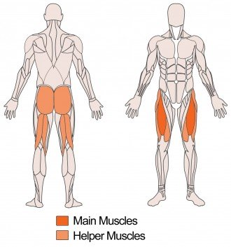 Main and helper muscles targeted with Barbell Front Squat Exercise